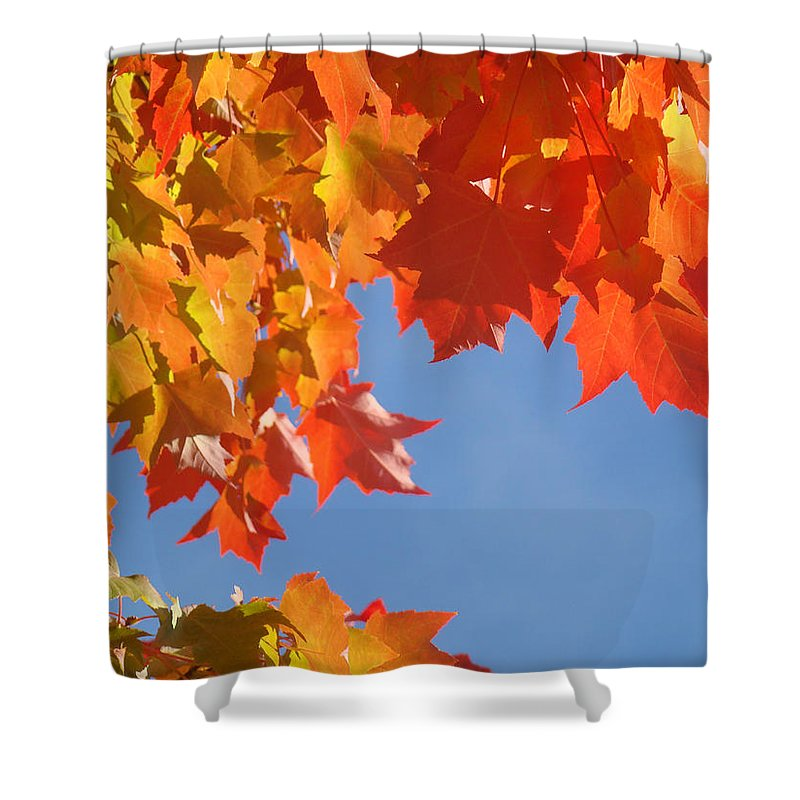 Red Shower Curtain featuring the photograph Orange Red Yellow Autumn Fall Tree Leaves Art by Baslee Troutman