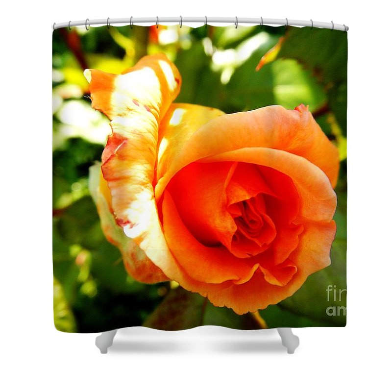 Floral Shower Curtain featuring the photograph Orange Rose Bloom by Loreta Mickiene
