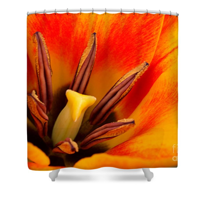 Amsterdam Shower Curtain featuring the photograph Orange Tulip by Deborah Benbrook