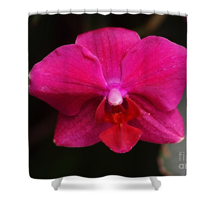 Flora Shower Curtain featuring the photograph Orchid 199 by Rudi Prott
