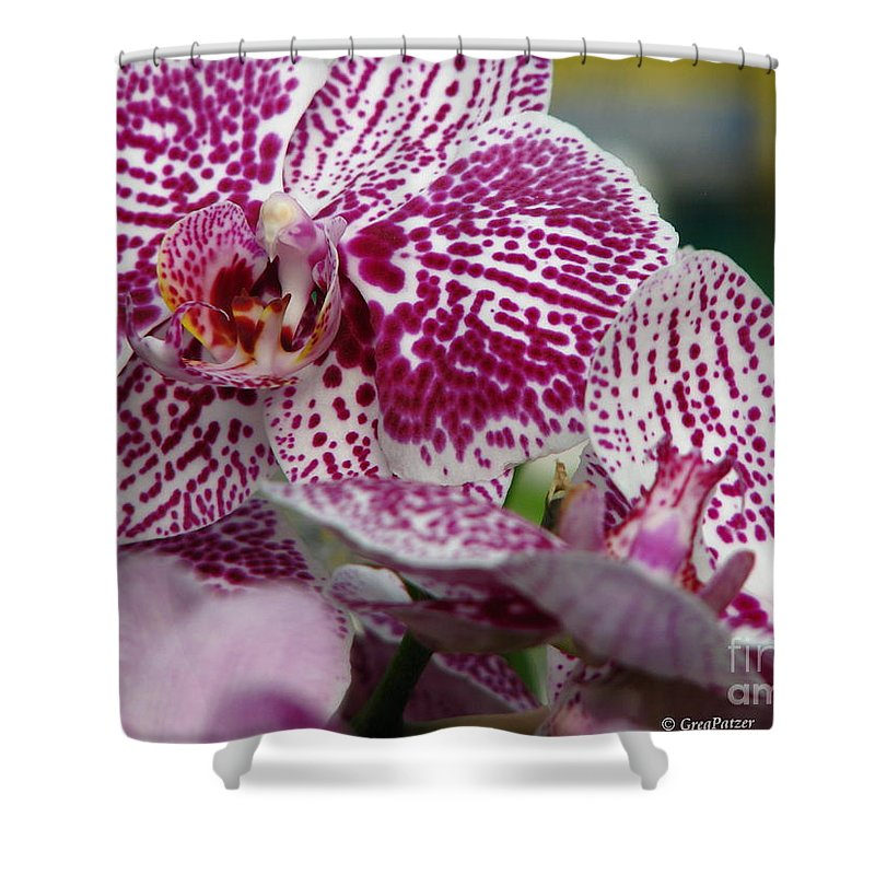 Patzer Shower Curtain featuring the photograph Orchid Art by Greg Patzer
