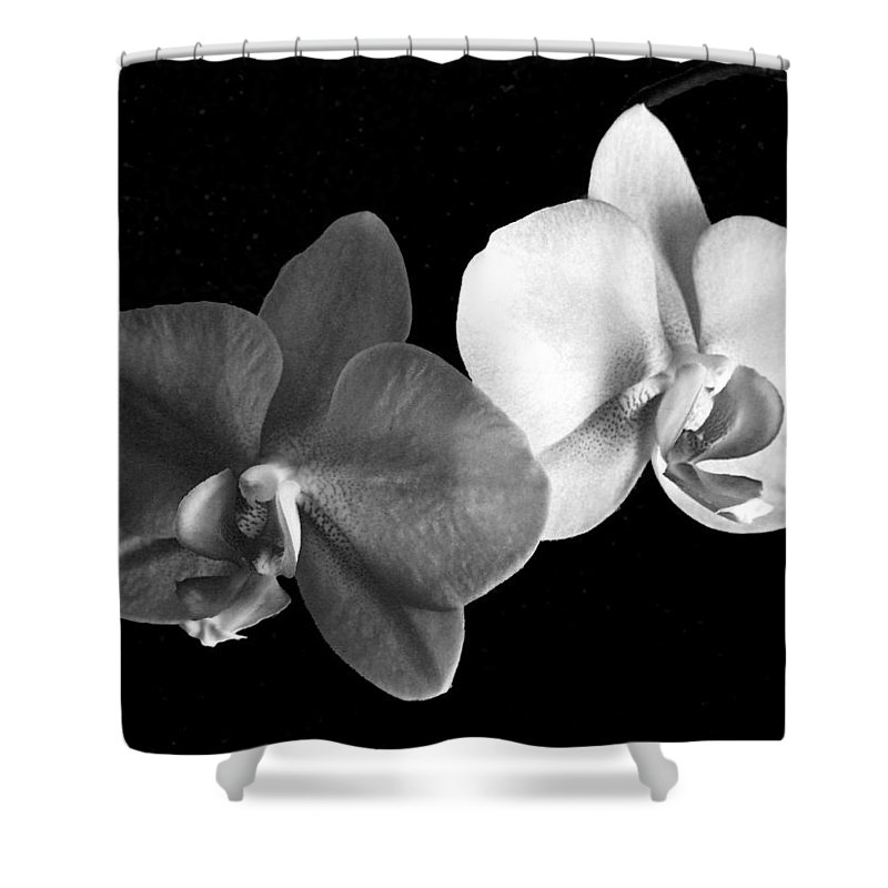 Floral Shower Curtain featuring the photograph Orchid in black and white by Steve Karol
