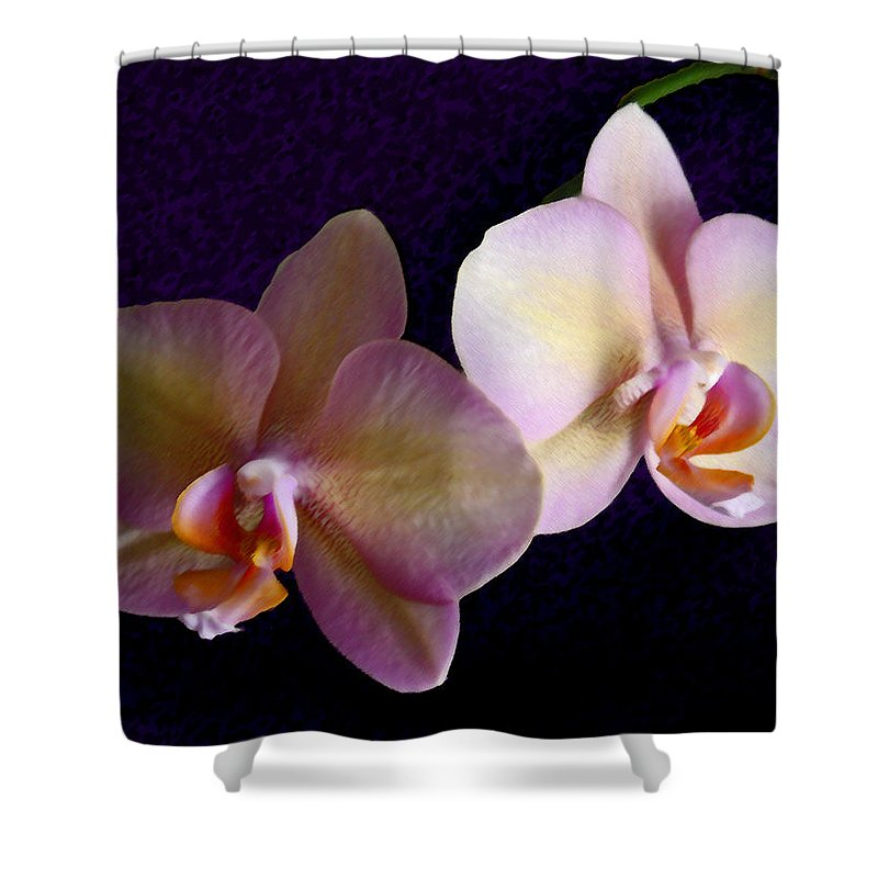 Orchid Shower Curtain featuring the photograph Orchid Light by Steve Karol