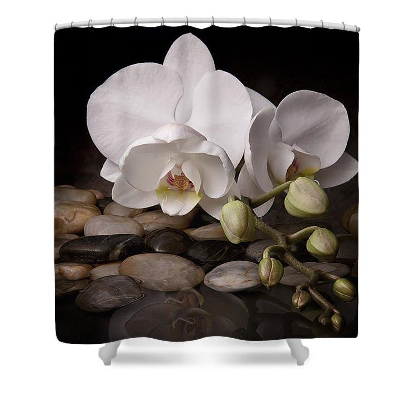 Arrangement Shower Curtain featuring the photograph Orchid - Sensuous Virtue by Tom Mc Nemar