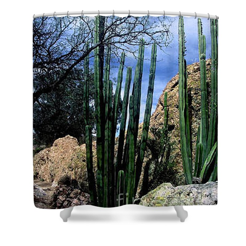 Cactus Shower Curtain featuring the photograph Organ Pipe by Kathy McClure