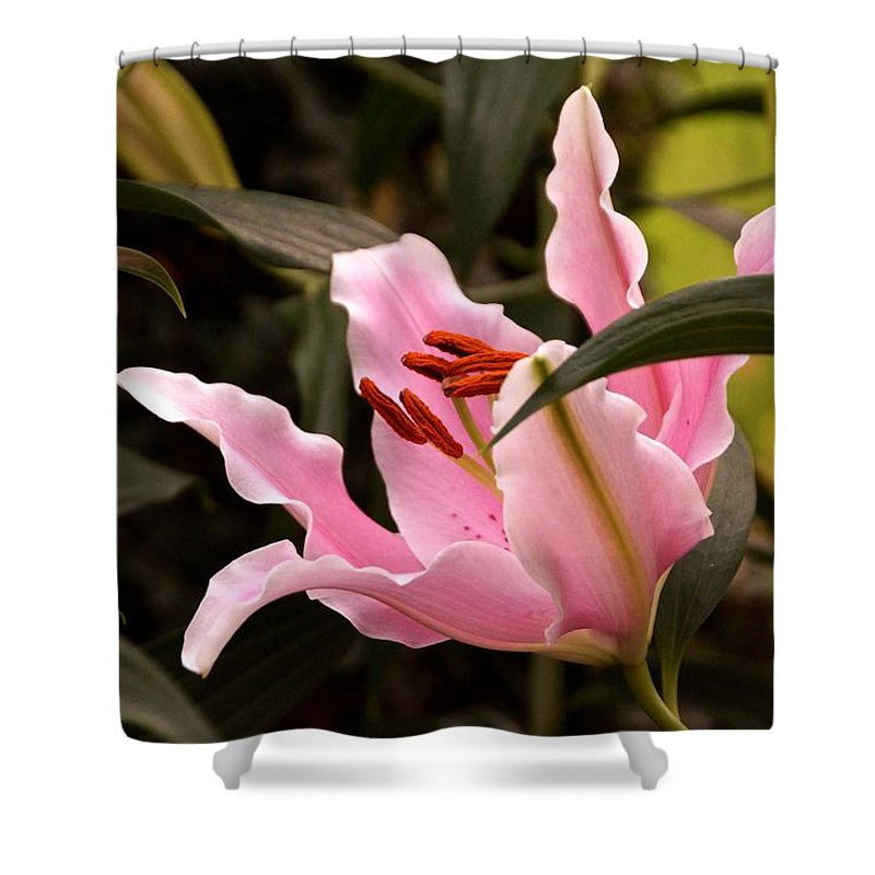 Large Pink Blossoms Shower Curtain featuring the photograph Oriental Lily Beauty by Byron Varvarigos