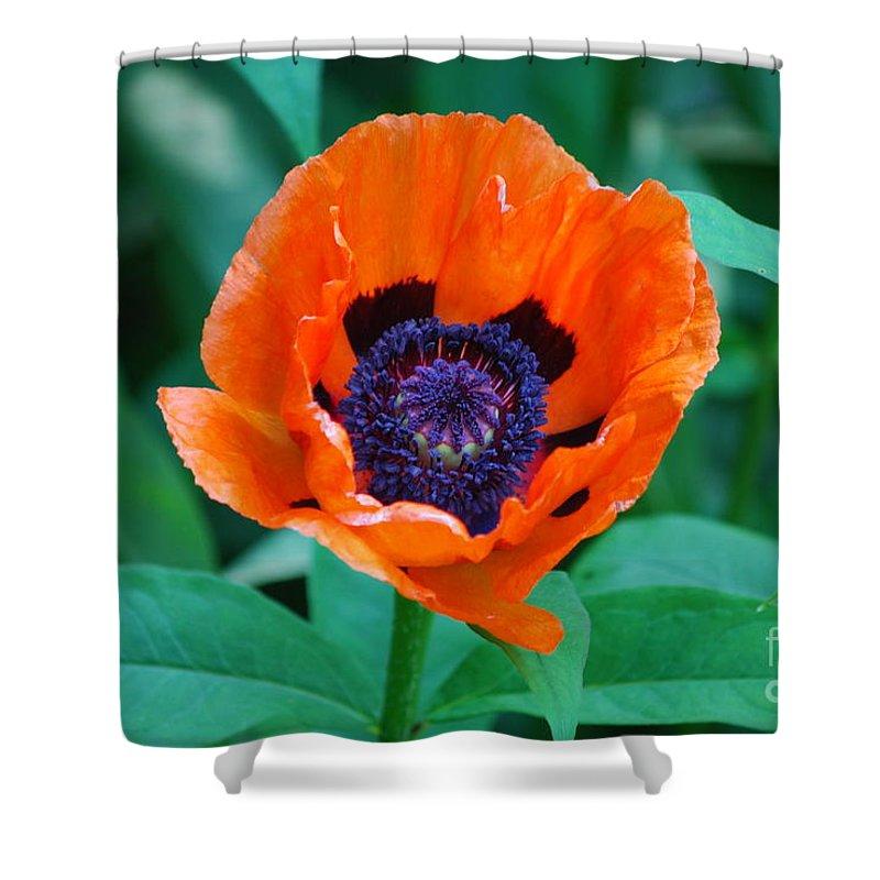 Poppy Shower Curtain featuring the photograph Oriental Poppy Flower by DejaVu Designs
