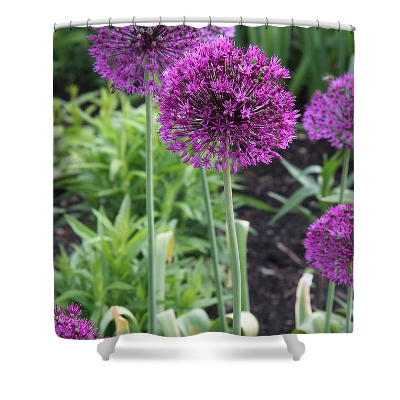 Flowers Shower Curtain featuring the photograph Ornamental Leek Flower by Christiane Schulze Art And Photography