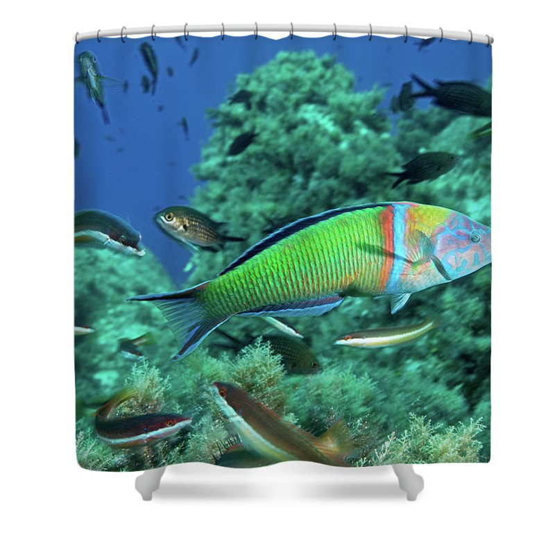 Underwater Shower Curtain featuring the photograph Ornate Wrasse by Gerard Soury