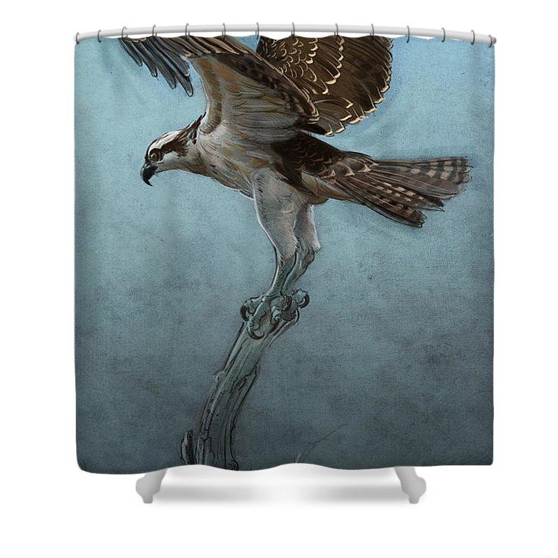 Osprey Shower Curtains