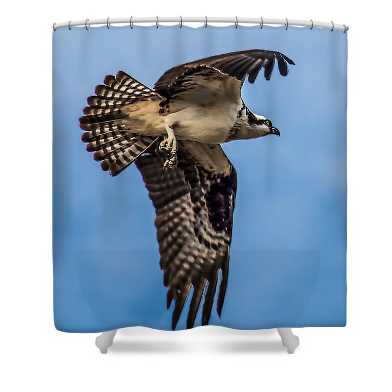 Osprey Shower Curtain featuring the photograph Osprey Flying Away by Robert Bales