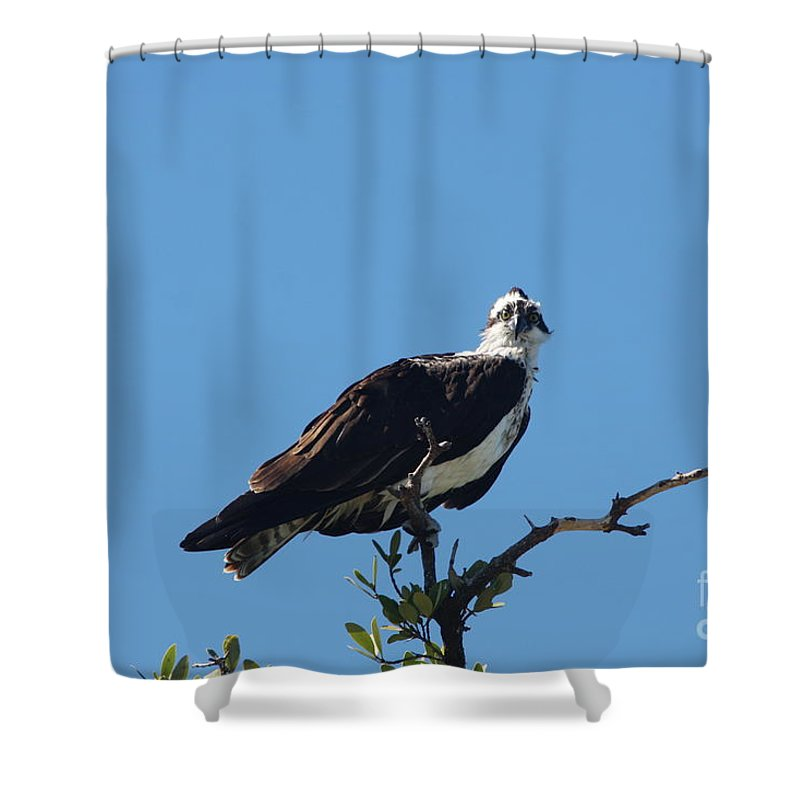 Osprey Shower Curtain featuring the photograph Osprey In A Tree by Christiane Schulze Art And Photography