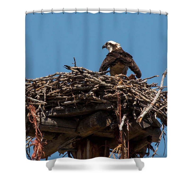 Osprey Shower Curtain featuring the photograph Osprey Nest by John Daly