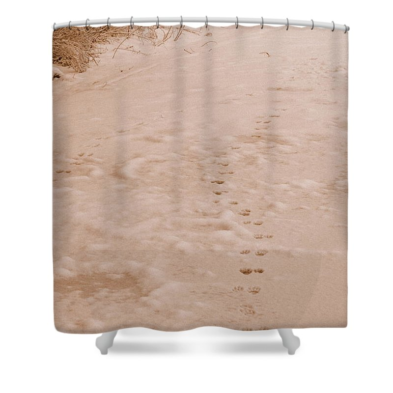 Snow Shower Curtain featuring the photograph Otter Tracks In Fresh Snow by Carol Groenen