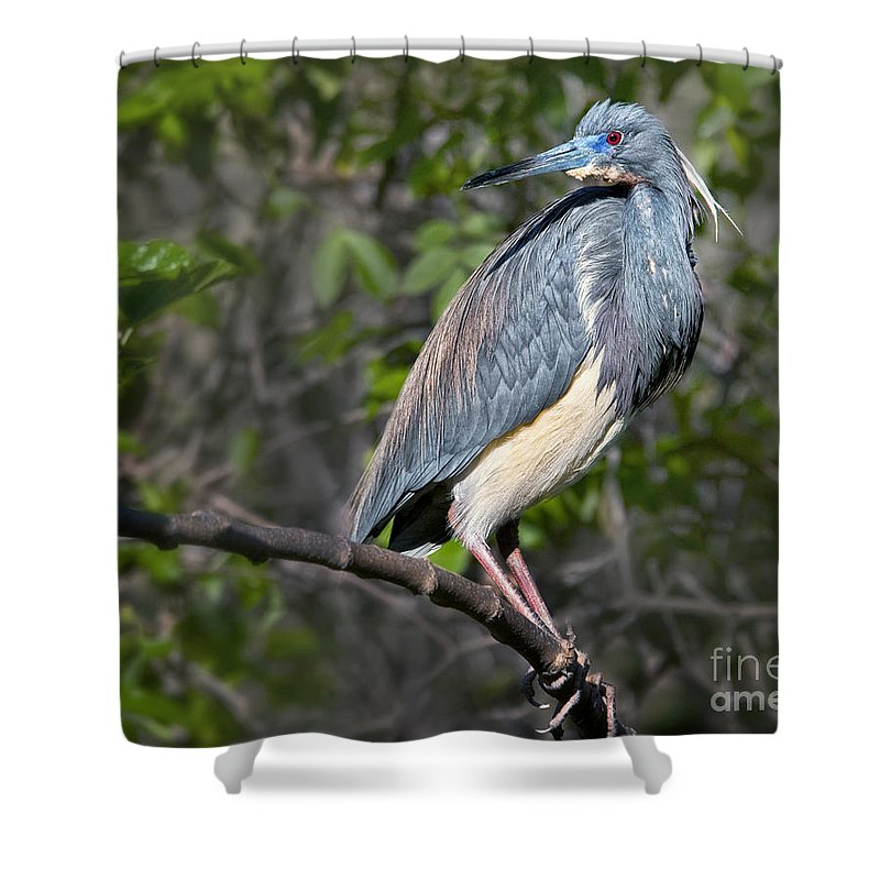Shower Curtain featuring the photograph Over There by Claudia Kuhn