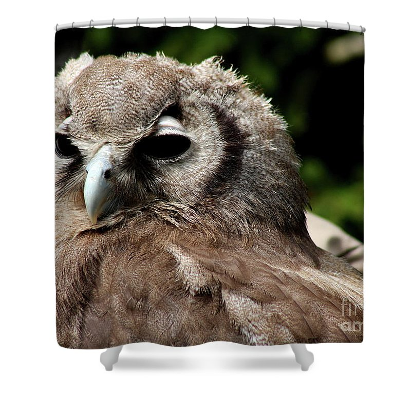 Owl Shower Curtain featuring the photograph Owl Portrait by Christiane Schulze Art And Photography