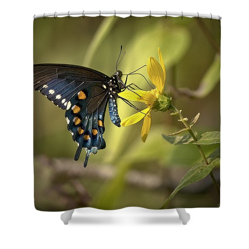 Butterfly Shower Curtain featuring the photograph Ozark Spicebush Swallowtail On Sunflower by Michael Dougherty