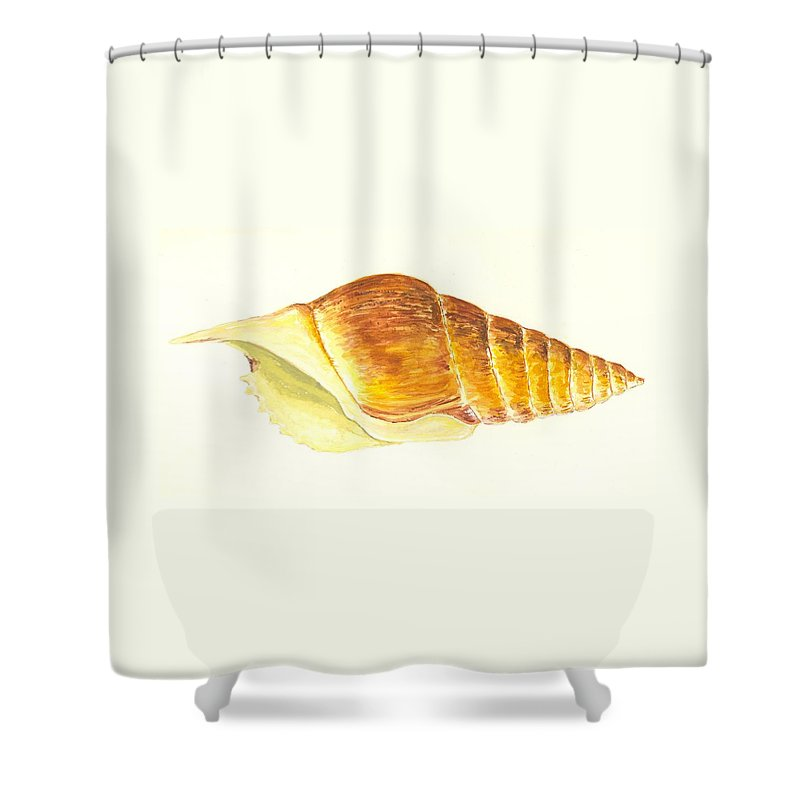 Sea Shower Curtain featuring the painting Pacific Triton Sea Shell by Michael Vigliotti