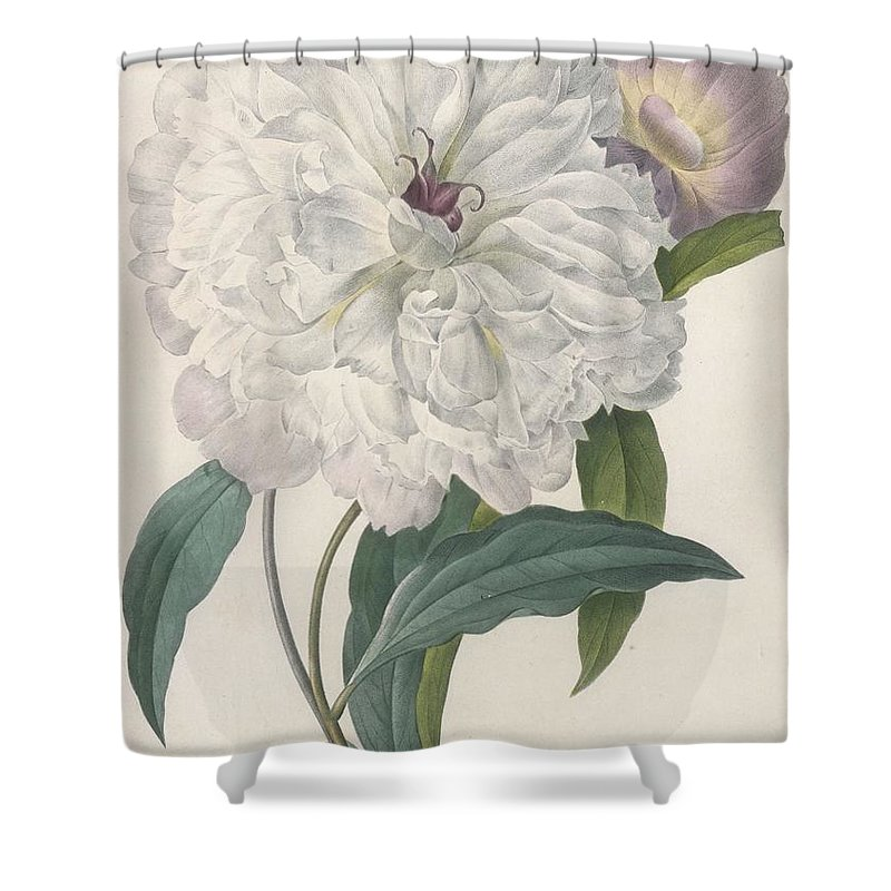 White Peony Drawings Shower Curtains