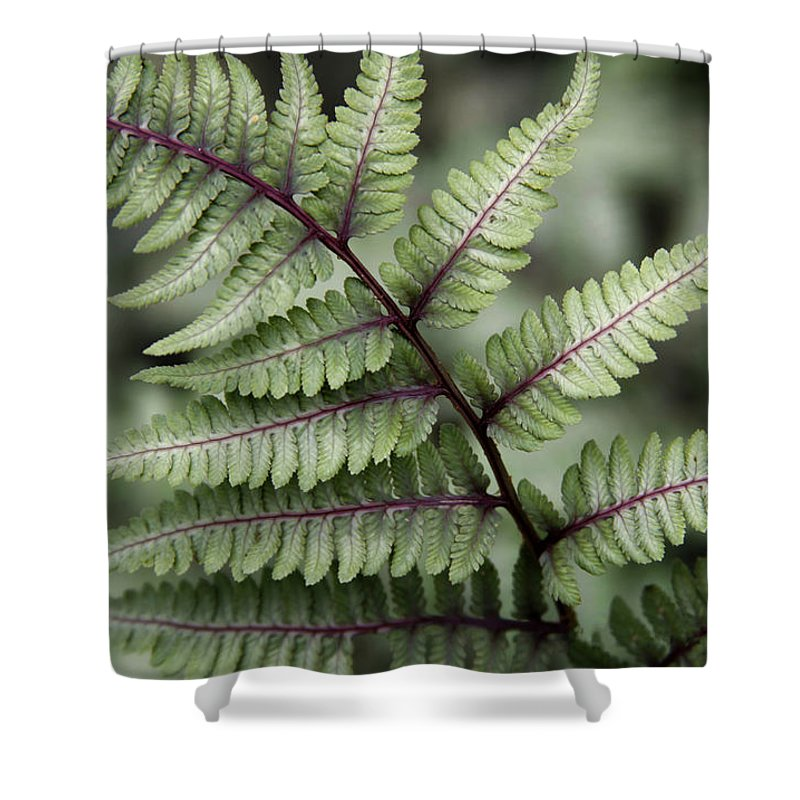 Fern Shower Curtain featuring the photograph Painted Fern by Sharon Horn