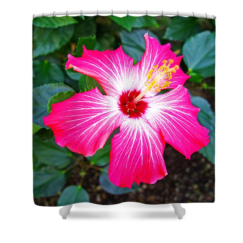Painted Lady Hibiscus Shower Curtain For Sale By Rich Walter