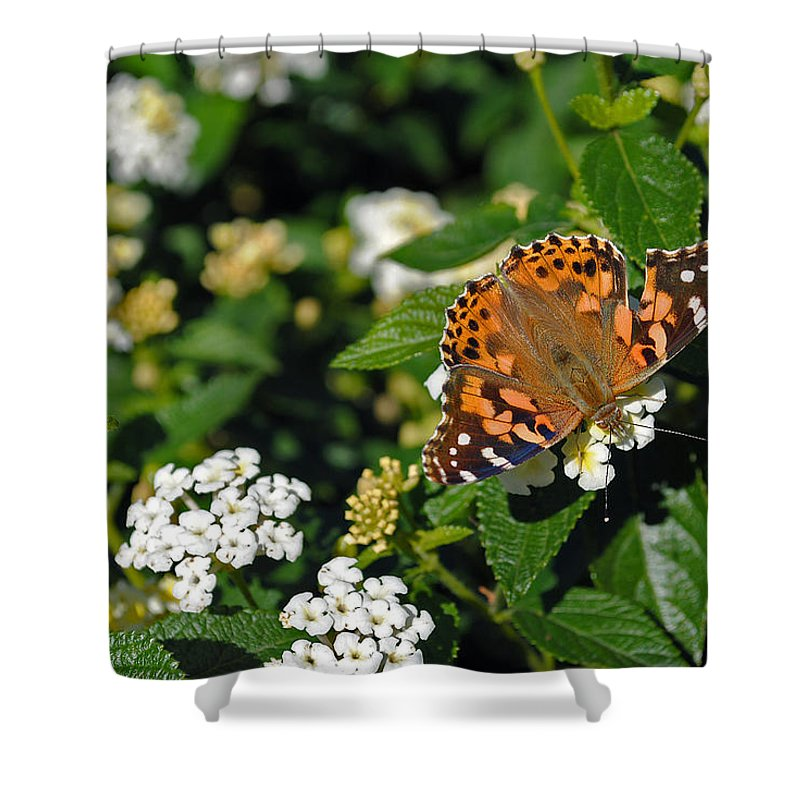 Nature Shower Curtain featuring the photograph Painted Lady by Skip Willits