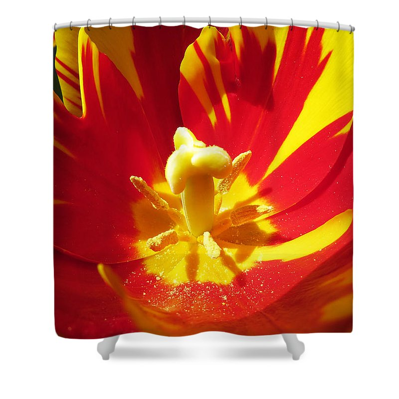 Tulip Shower Curtain featuring the photograph Painted Tulip by Shawna Rowe