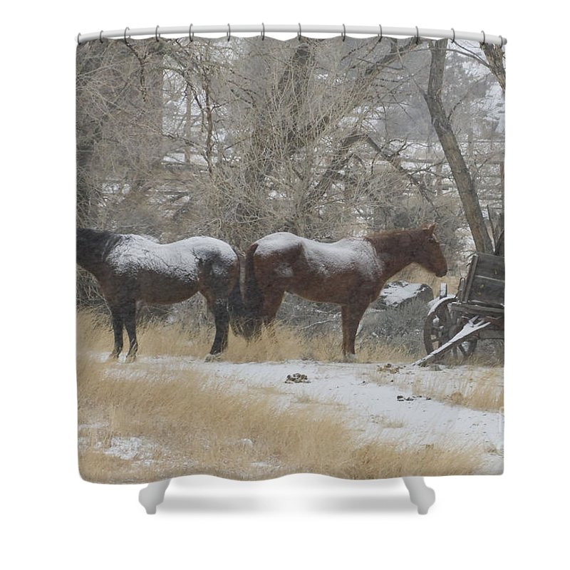 Horse Shower Curtain featuring the photograph Pair Of Horses In A Snow Storm  #0559 by J L Woody Wooden