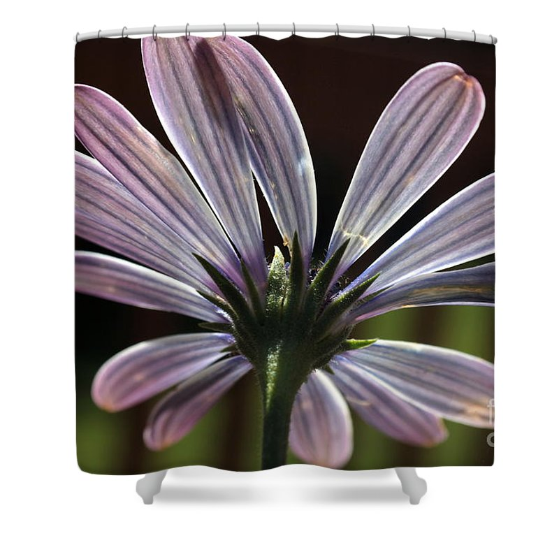 Flower Shower Curtain featuring the photograph Pale Blue Flower Backlit by Kenny Glotfelty