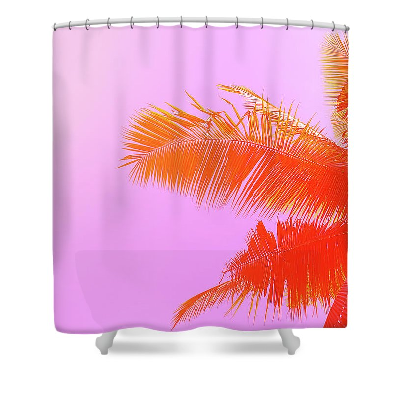 Orange Color Shower Curtain featuring the photograph Palm Tree On Sky Background. Palm Leaf by Slavadubrovin