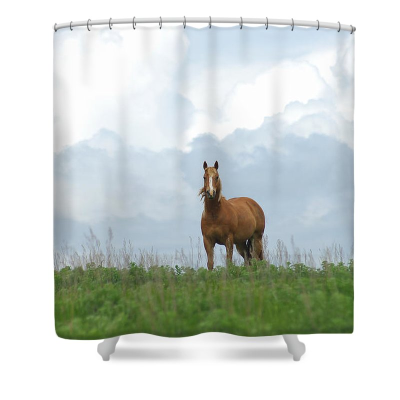 Palomino Shower Curtain featuring the photograph Palomino by Jenny Gandert