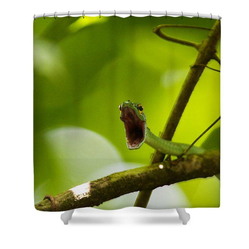 Honduras Shower Curtain featuring the photograph Panacam Green Snake by David Beebe