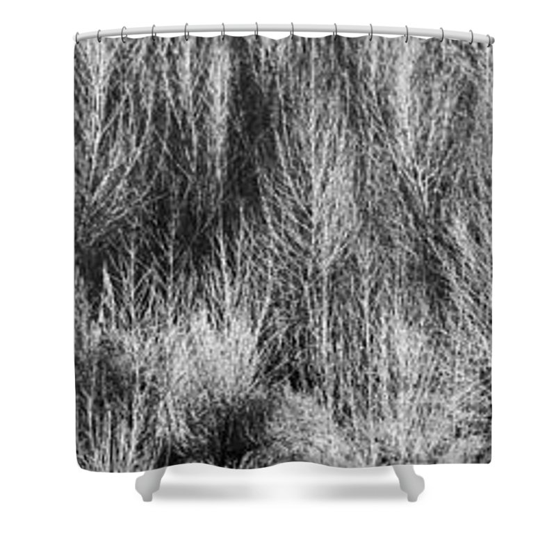 Roena King Shower Curtain featuring the photograph Panorama Winter Trees B And W by Roena King