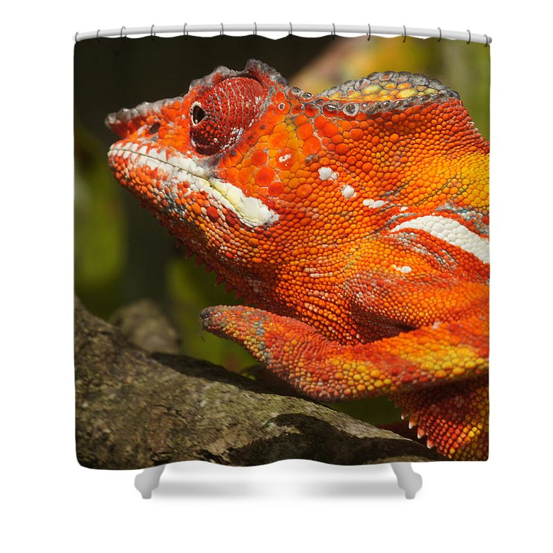 Nature Shower Curtain featuring the photograph panther chameleon from Madagascar 3 by Rudi Prott