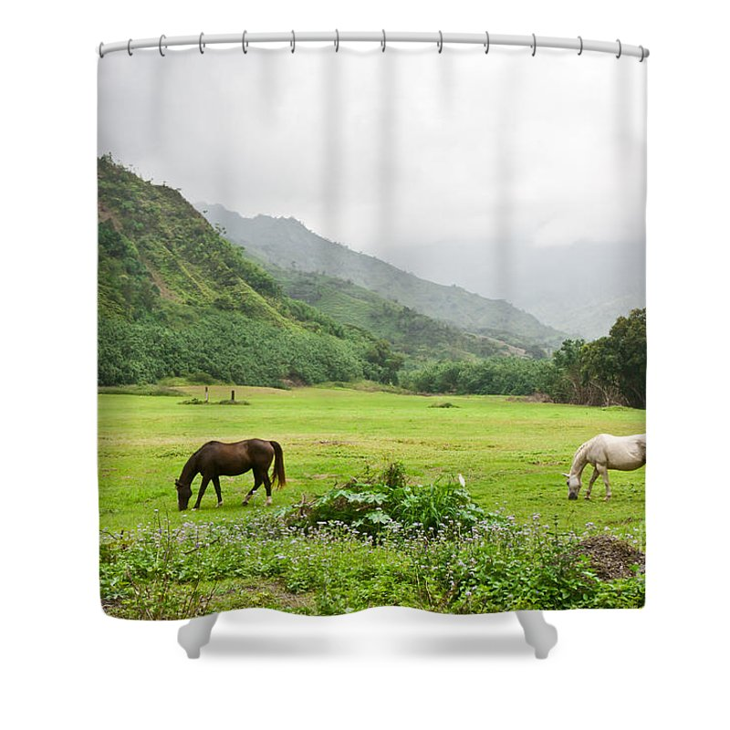 Beautiful Brown Eat Eating Equine Farm Farming Feeding Flowers Grass Graze Grazing Green Hawaii Horse Horses Ideal Idyllic Island Kauai Land Lush Mountains Nature Paradise Pasture Peaceful Picturesque Purple Ranch Scenic Tropical Tropics Two Verdant White Shower Curtain featuring the photograph Paradise Found by F Innes - Finesse Fine Art
