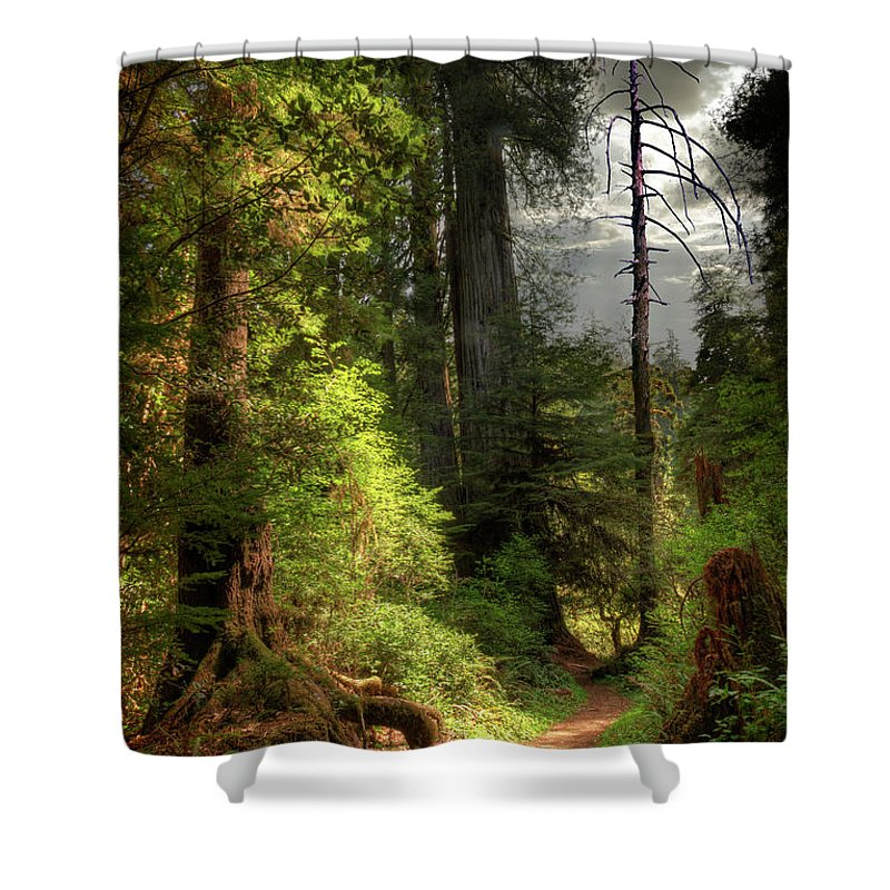 Tranquility Shower Curtain featuring the photograph Path Through Redwood Forest by Ed Freeman