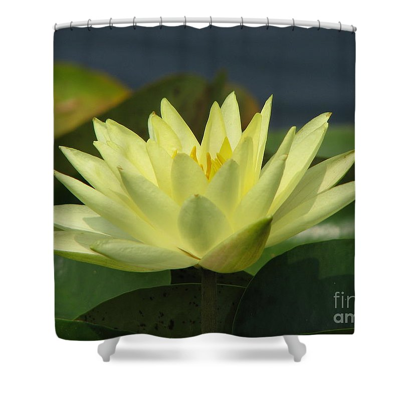 Lillies Shower Curtain featuring the photograph Peace by Amanda Barcon