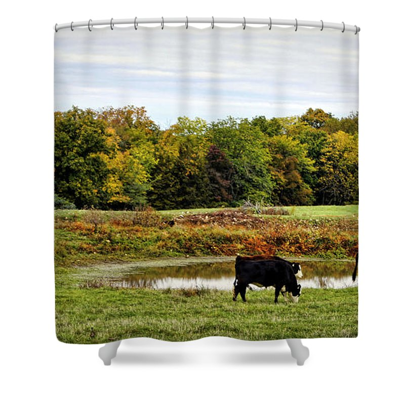 Cow Shower Curtain featuring the photograph Peaceful Pastures by Cricket Hackmann