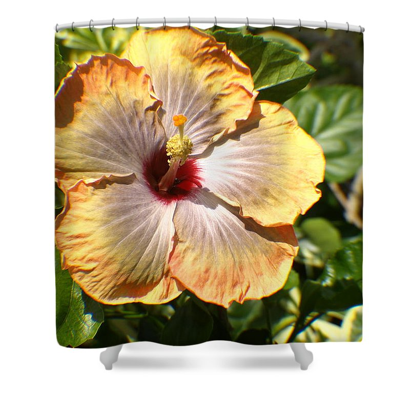 Flower Shower Curtain featuring the photograph Peach Flower by Jo Jurkiewicz