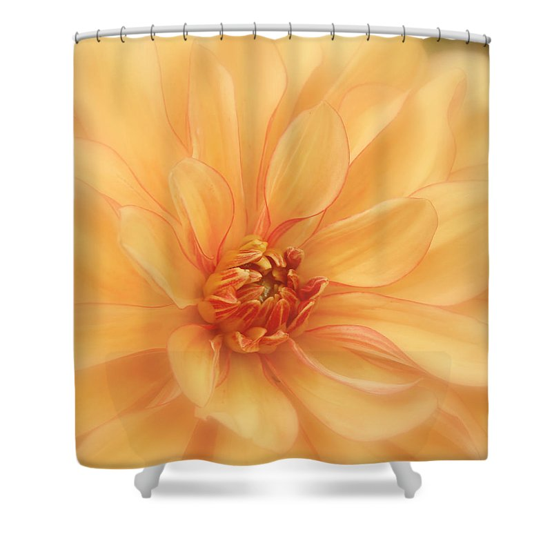 Orange Dahlia Shower Curtain featuring the photograph Peaches And Cream by Kim Hojnacki