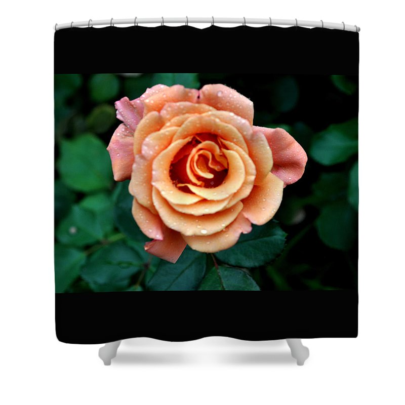 Flower Shower Curtain featuring the photograph Peachesncream by Jay Milo
