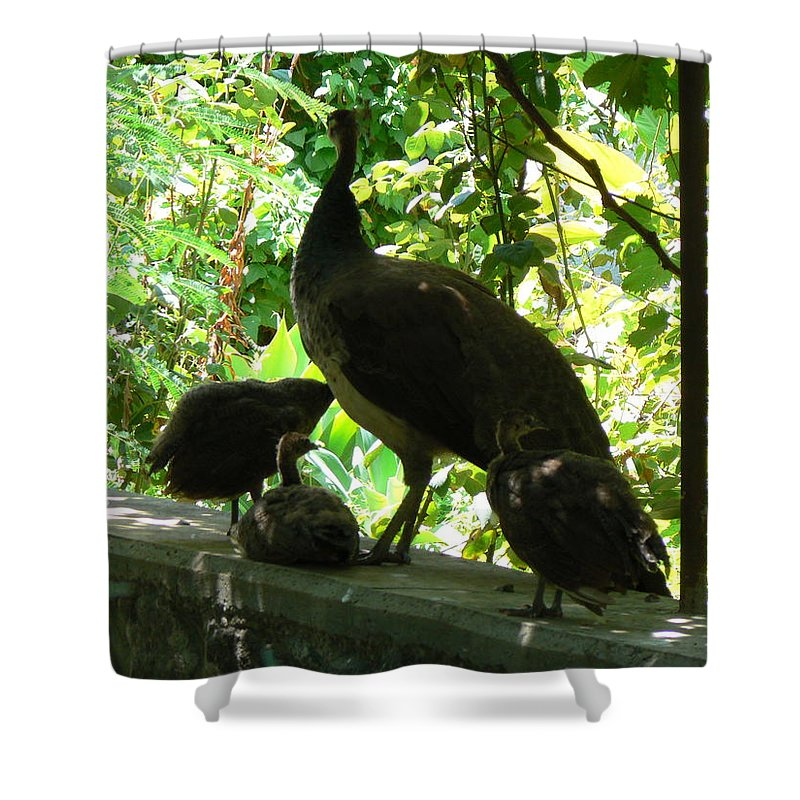 Shower Curtain featuring the photograph Peacock Family At Capernaum by Katerina Naumenko