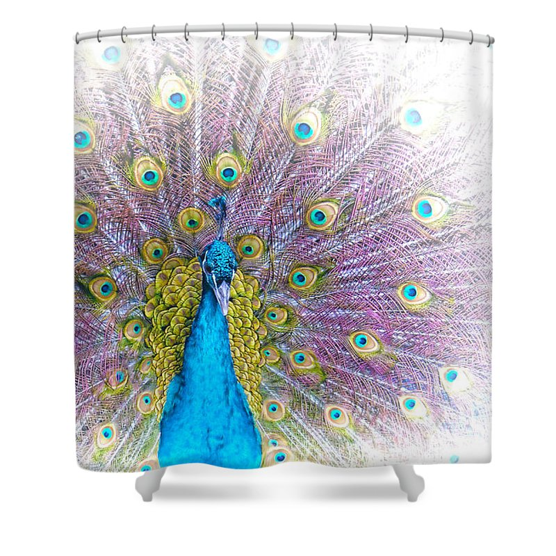 Animals Shower Curtain featuring the photograph Peacock by Holly Kempe
