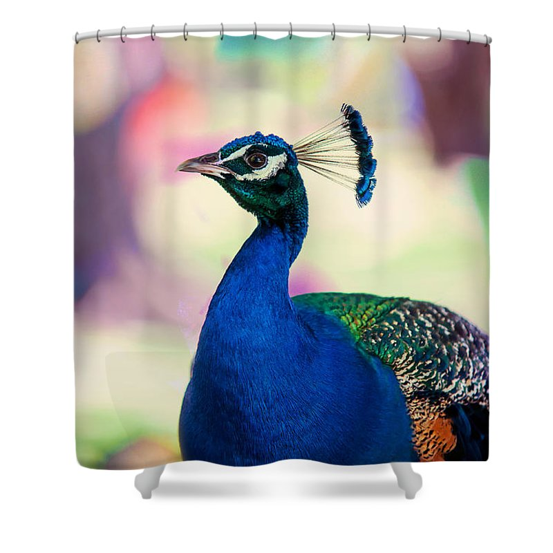 Peacock Shower Curtain Featuring The Photograph I Bird Of Paradise By Jenny Rainbow