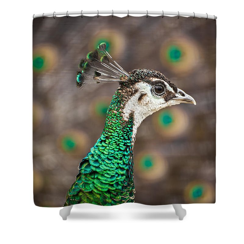 Animal Shower Curtain featuring the photograph Peahen And Peacock by Leslie Banks