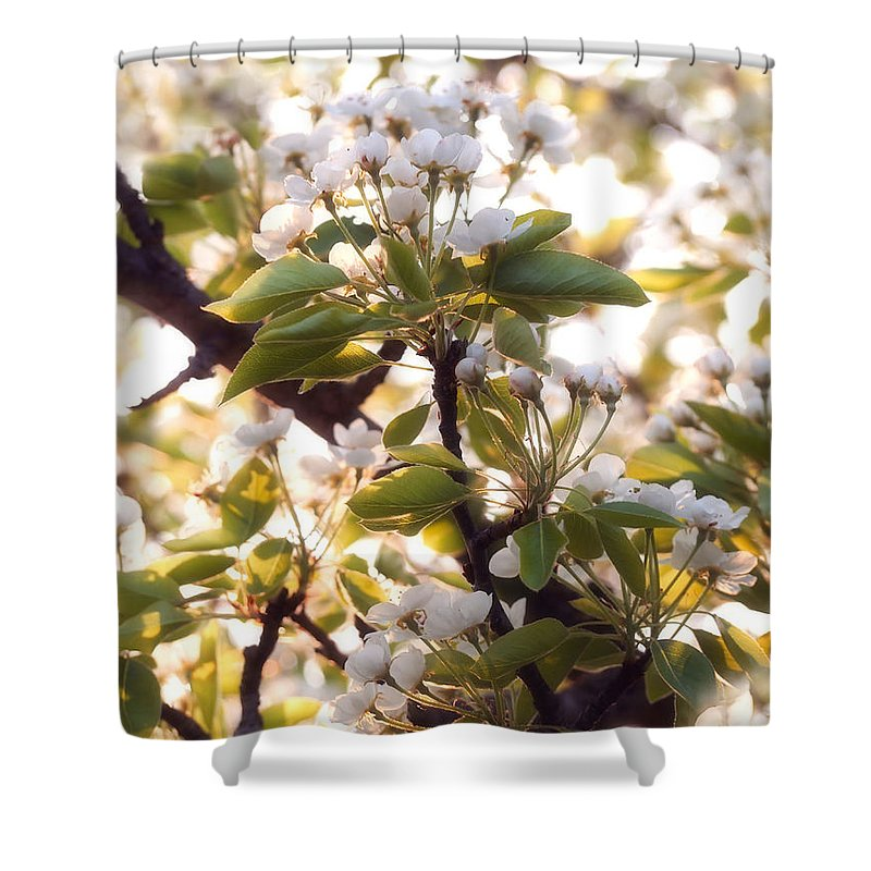 Pear Tree Shower Curtain featuring the photograph Pear Blossoms by Angie Rea