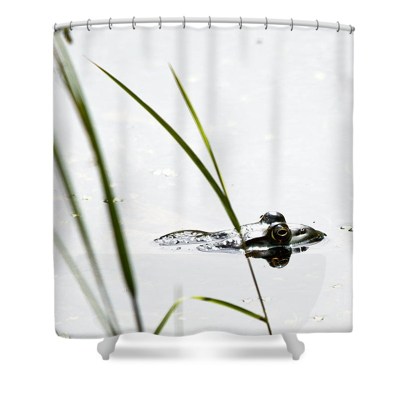Frog Shower Curtain featuring the photograph Peeking Frog by Cheryl Baxter