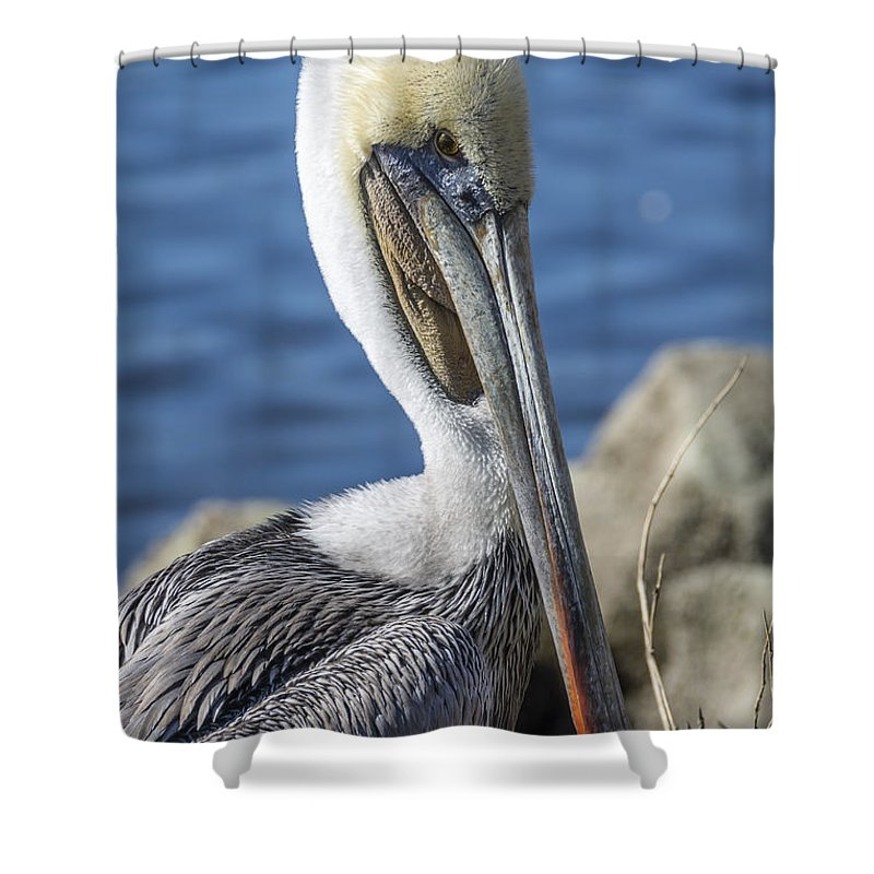 Pelican Shower Curtain featuring the photograph Pelican By The River by Bruce Frye