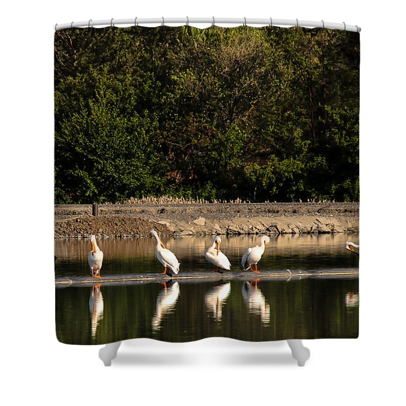 Birds Shower Curtain featuring the photograph Pelican Clean Up Time by Robert Bales