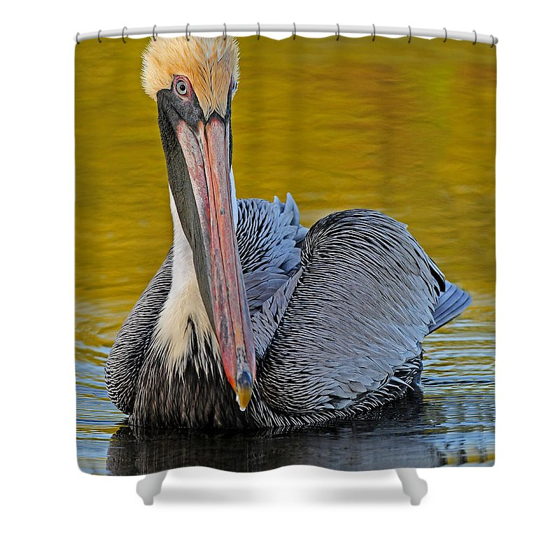 Pelican Shower Curtain featuring the photograph Pelican by Dave Mills